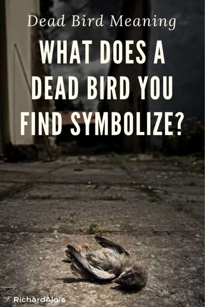 What Does a Dead Bird you find symbolize