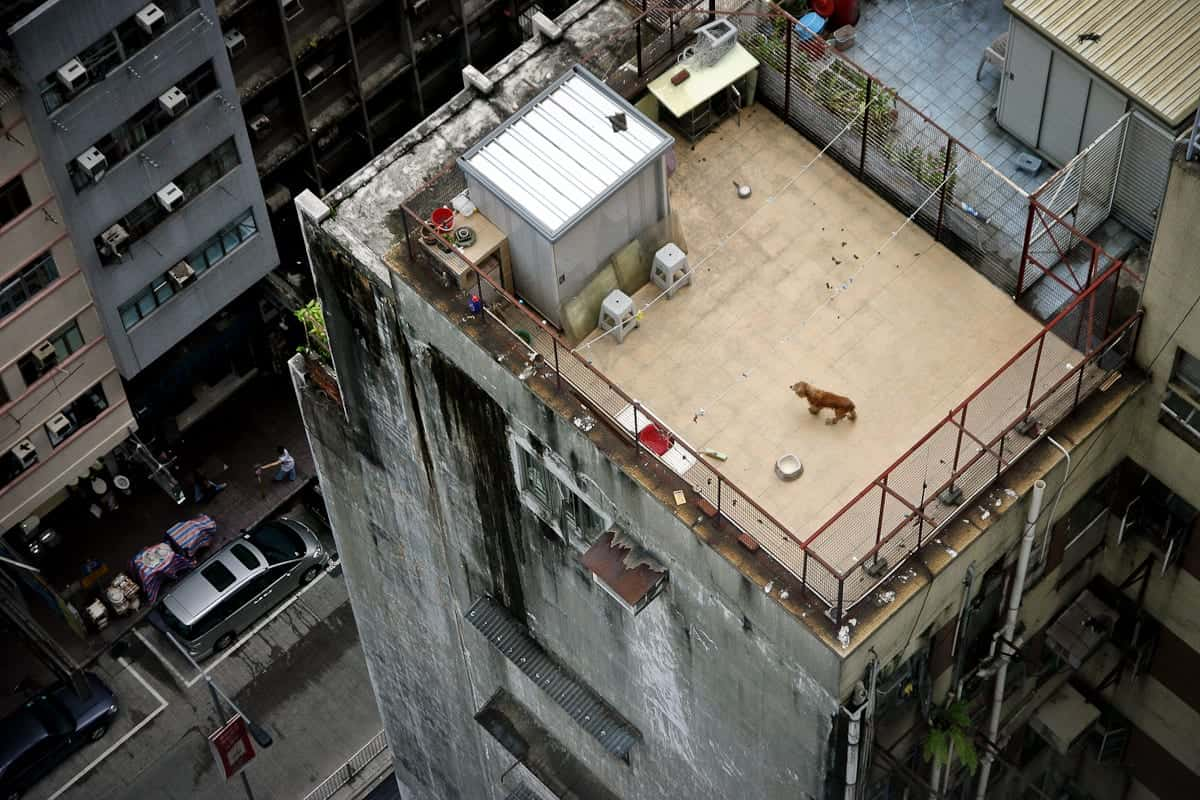 Loneliest dog Hongkong