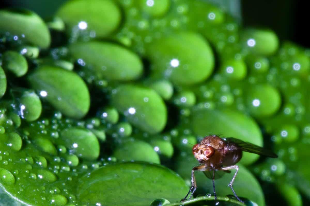 fly macro insect macro