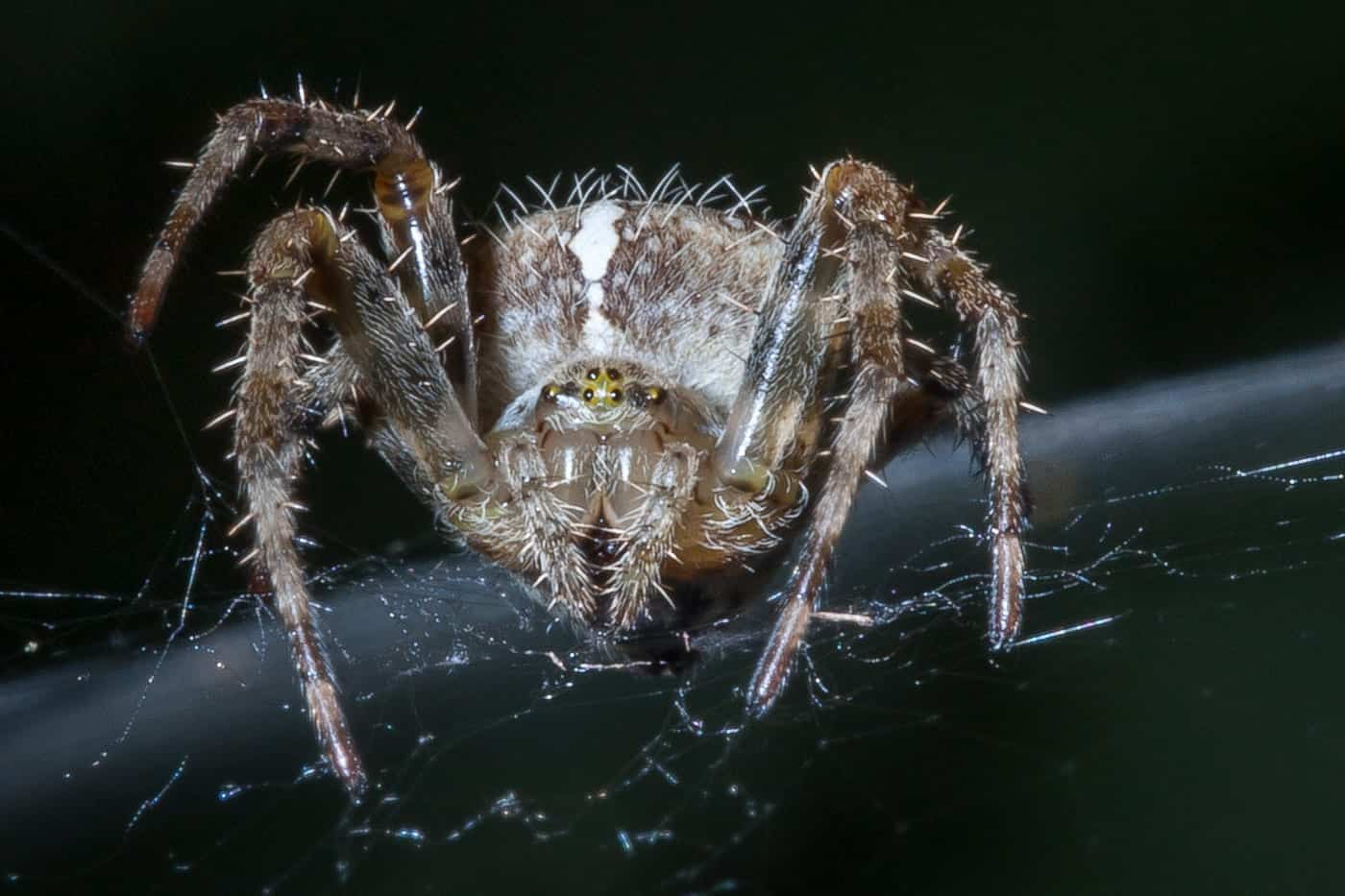 Scary Spiders Pictures 2