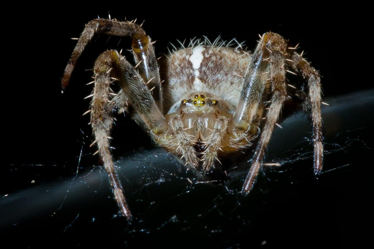 Scary spiders pictures