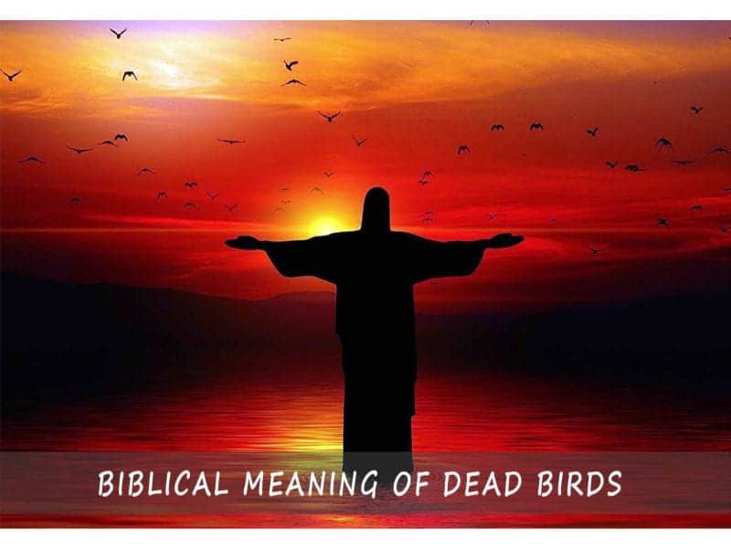 Biblical Meaning Of Dead Birds
