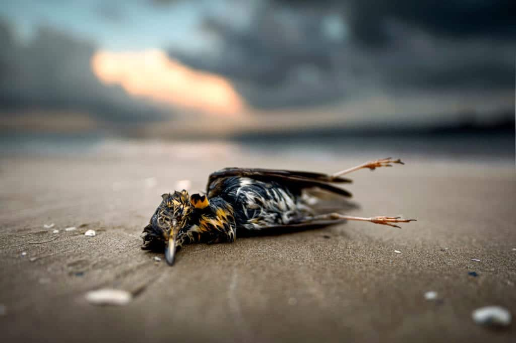 dead bird in yard