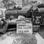 Monkey-Fish-Food-Rishikesh2-150x150 Browse