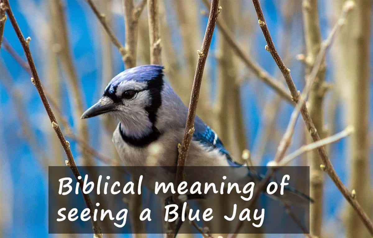 Biblical meaning of seeing a blue jay