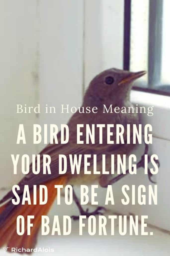 Bird-in-the-house-omen