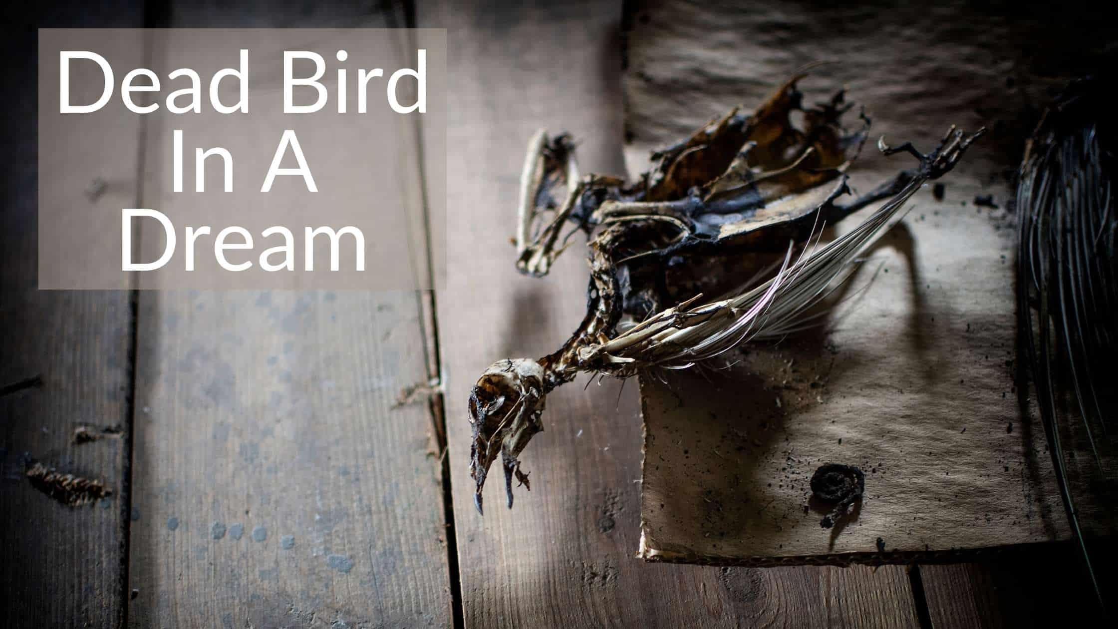 Dead Bird Dream