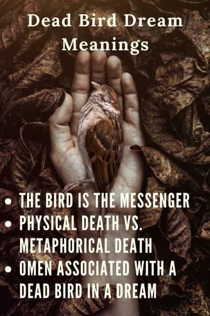 Dead Bird in Dream Symbolic Meaning