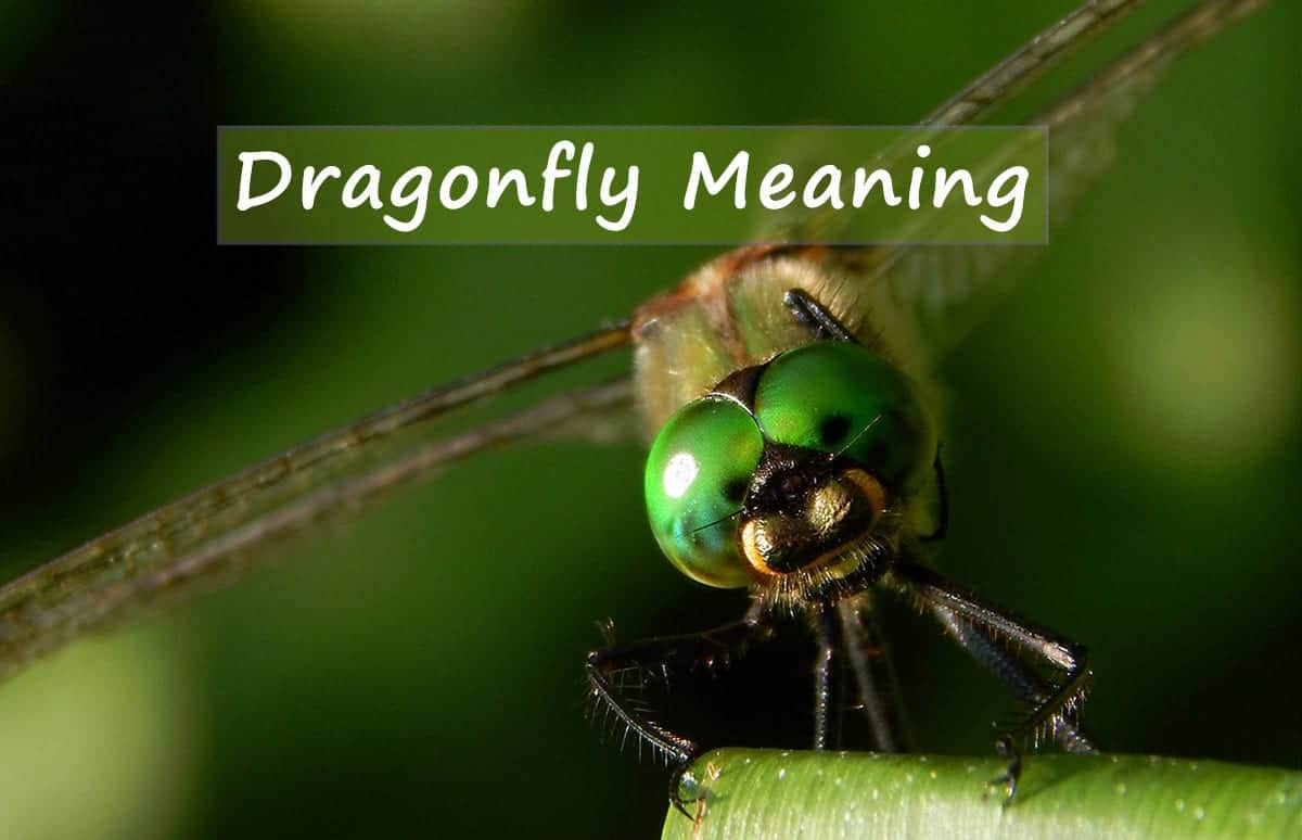 Dragonfly-meaning