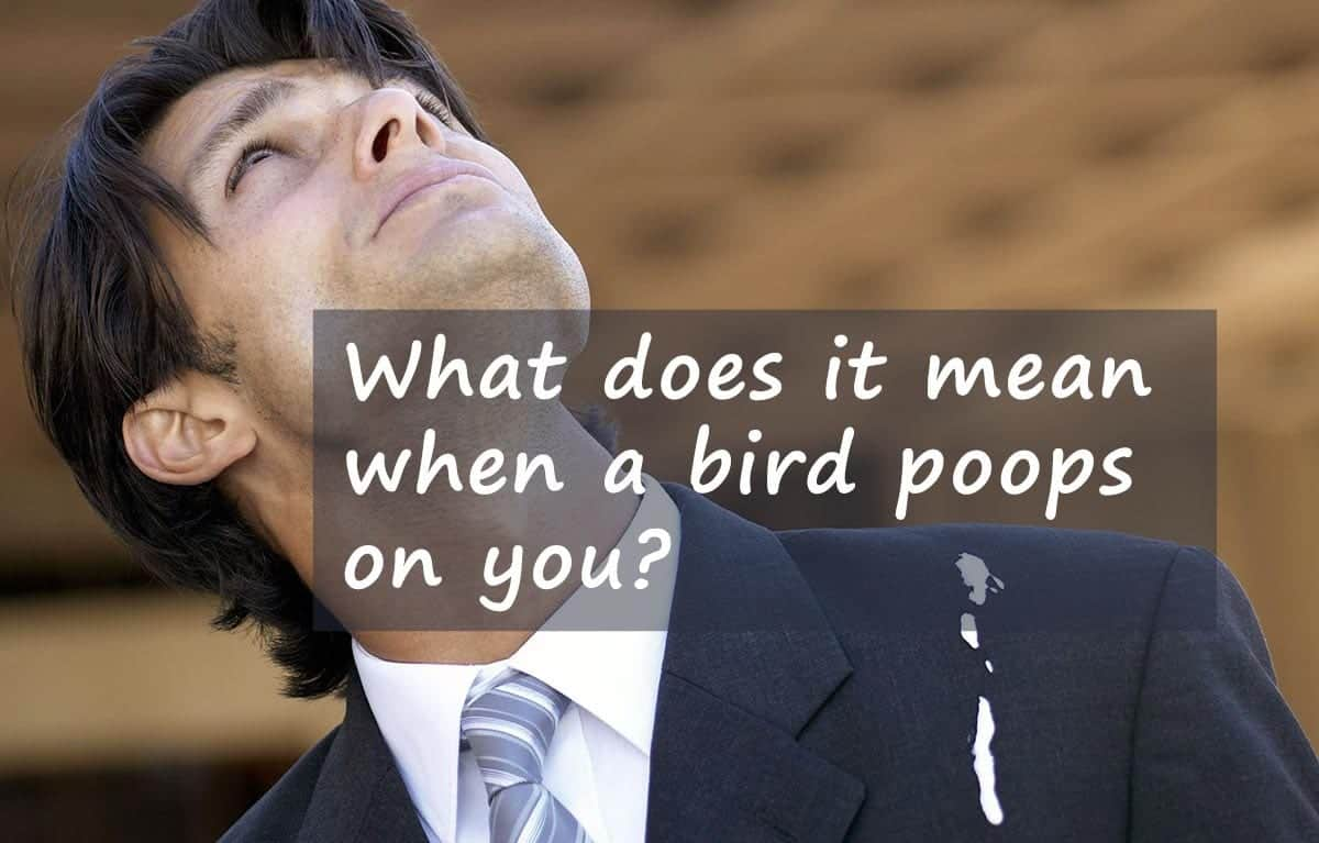 What does it mean when a bird poops on you