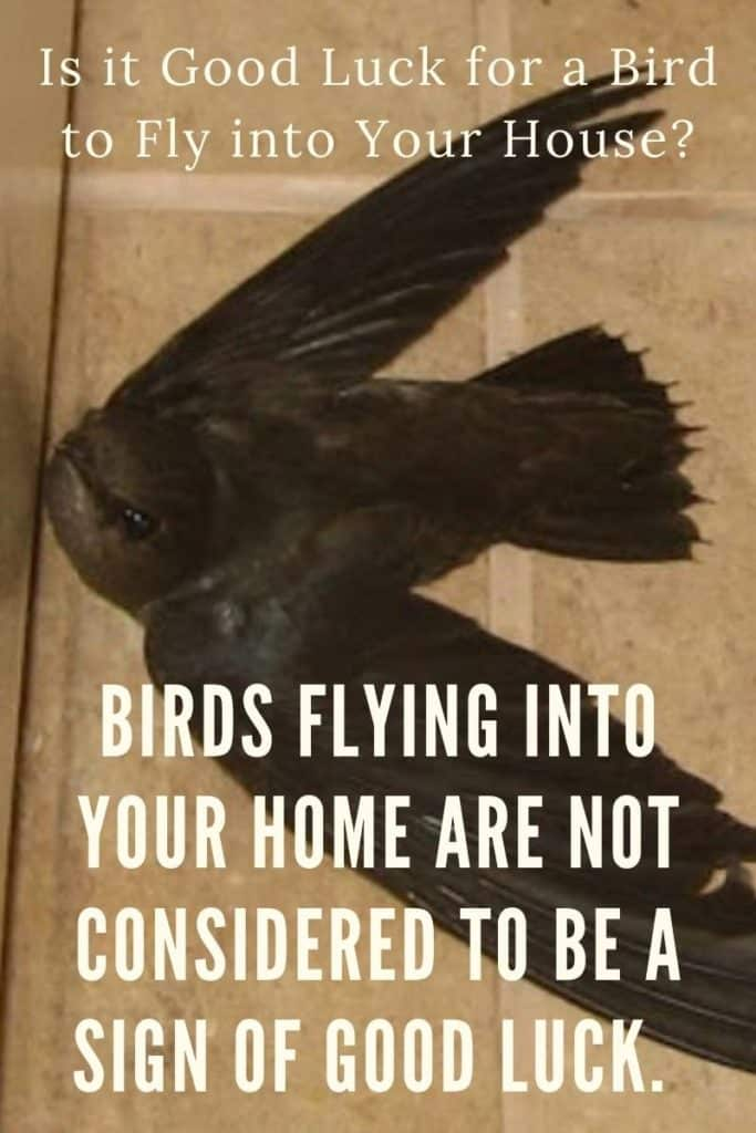 bird-in-house-supersitions