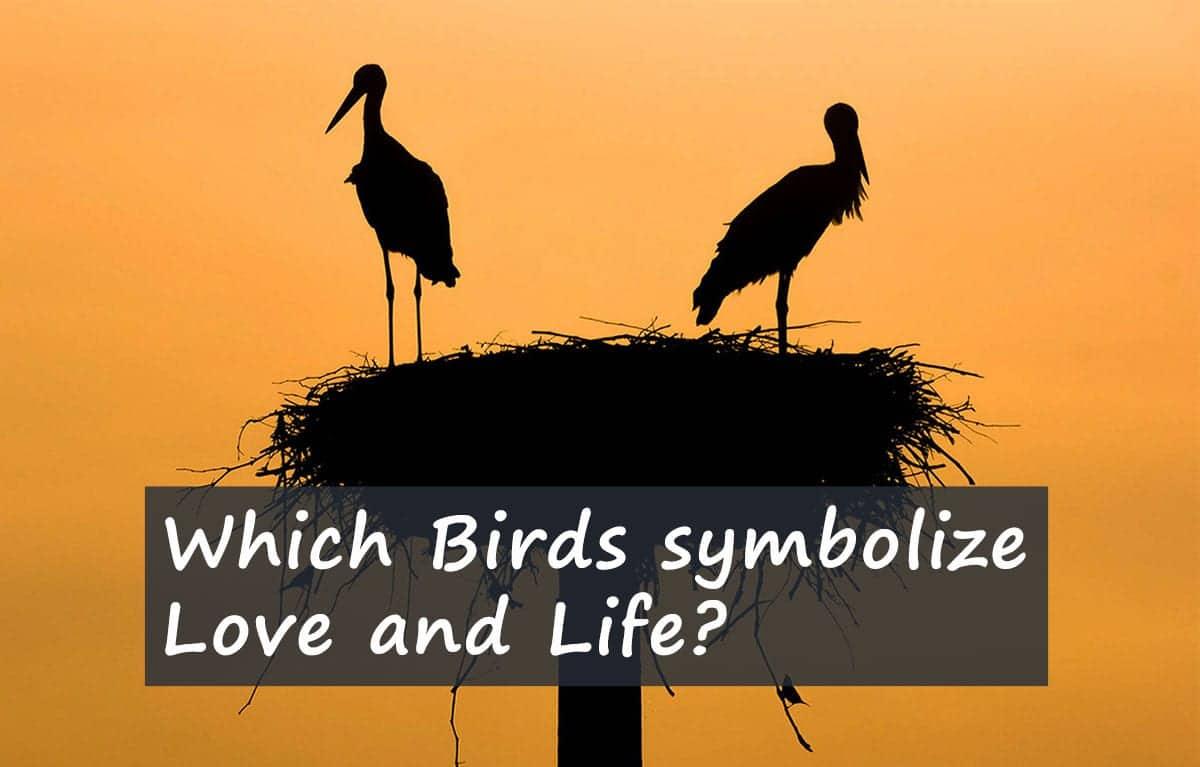 bird-symbilism-stork-for-life