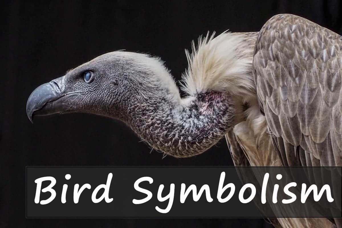 bird-symbolism