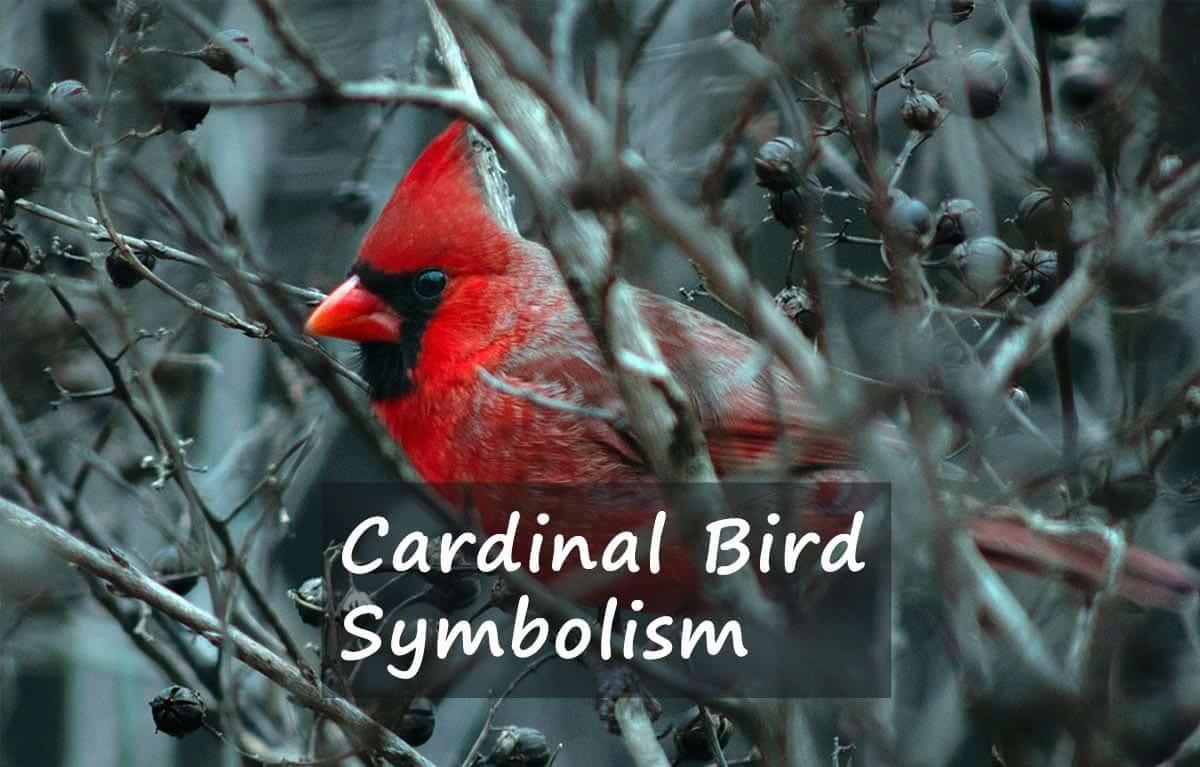 cardinal bird symbolism
