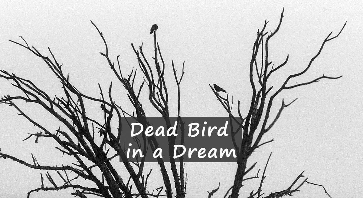 Dead Bird in Dream – what it means to dream of dead birds