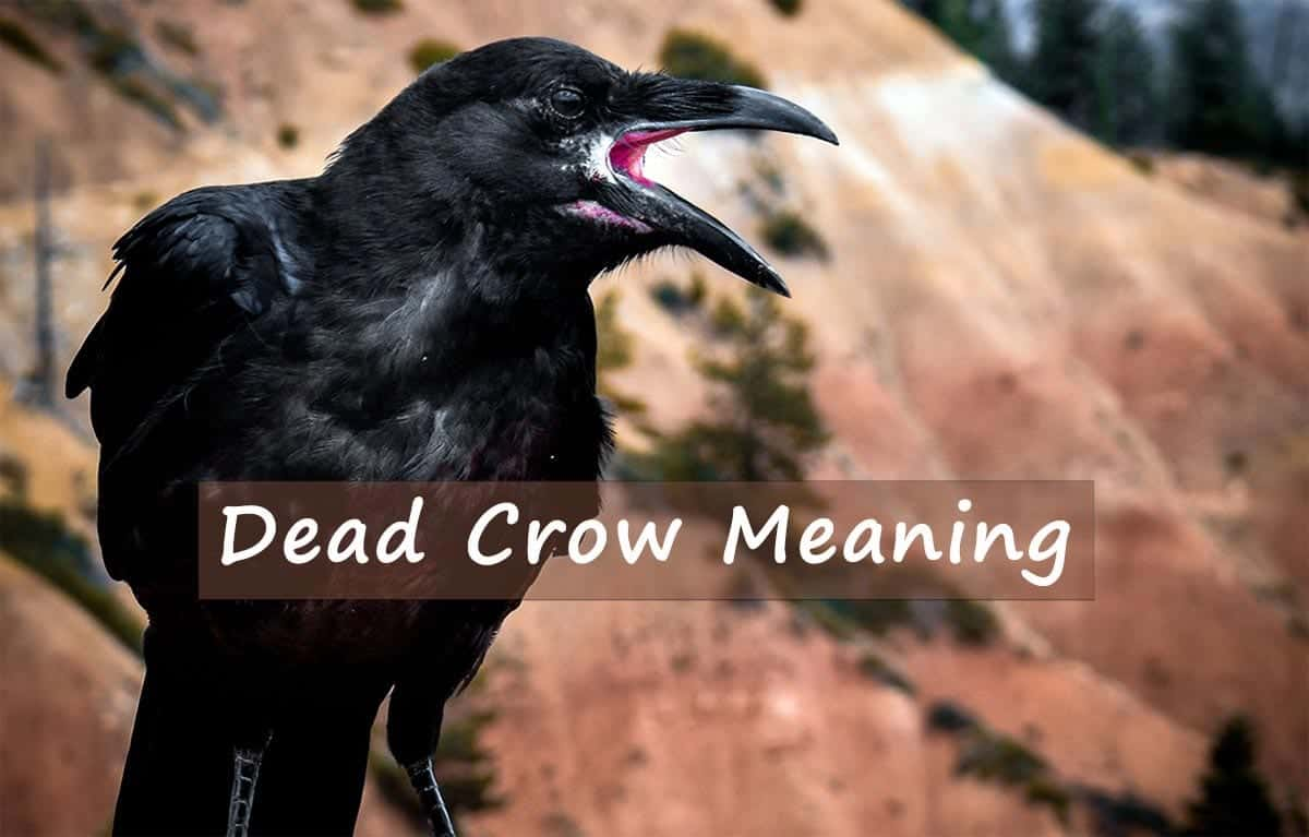dead-crow-meaning