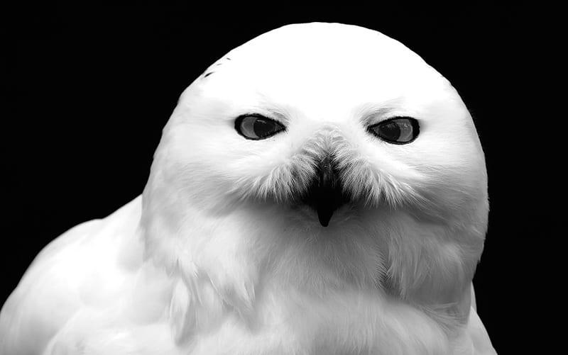 Owls evil