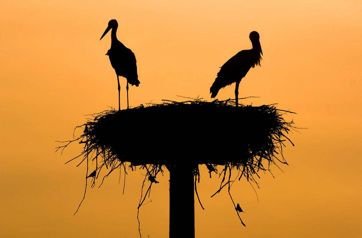 bird symbolism - stork for life
