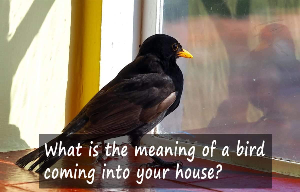 Bird in house Meaning
