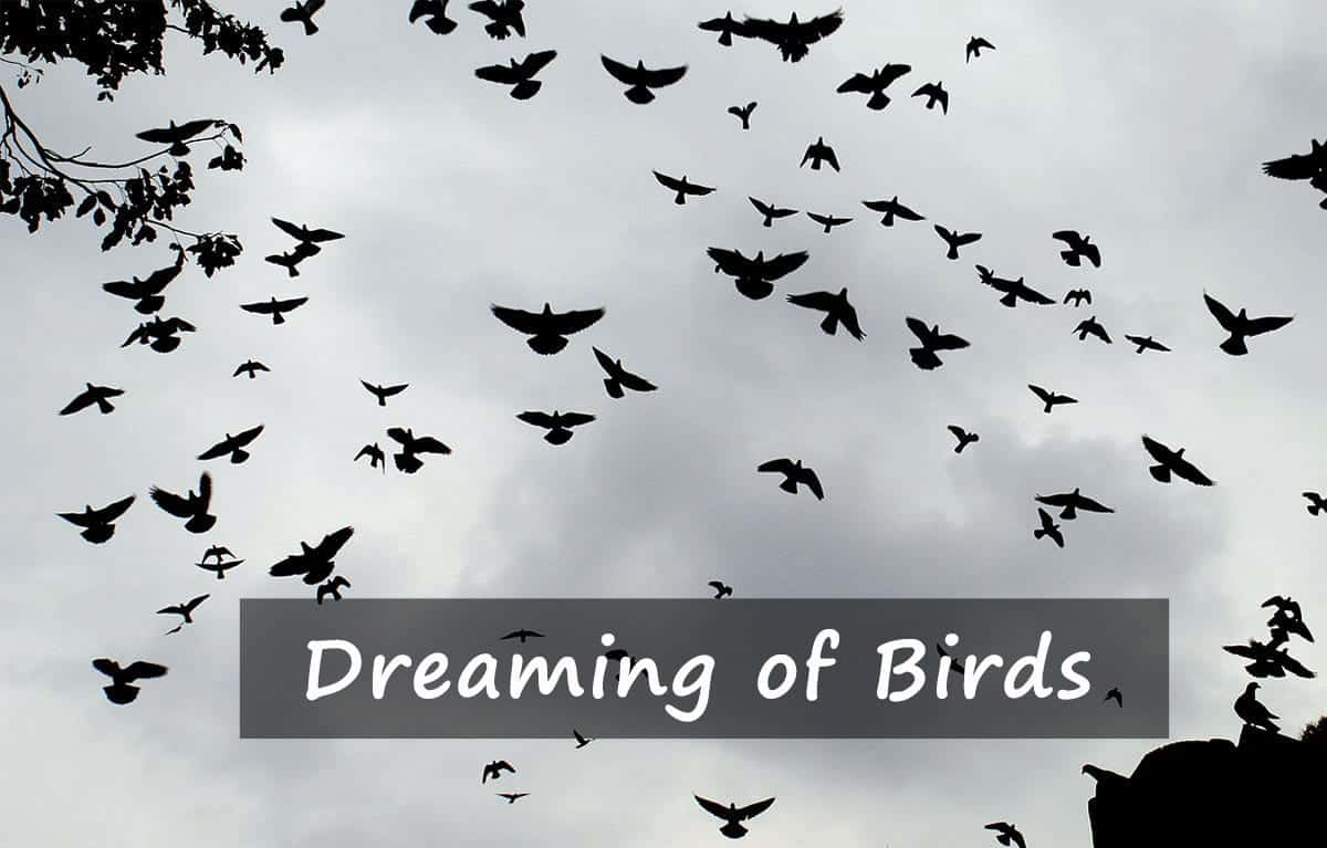 Dreaming of birds