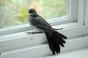 Is it good luck for a bird to fly into your house