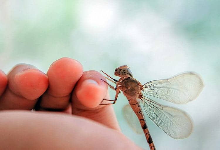 Meaning-of-a-dragonfly-landing-on-you