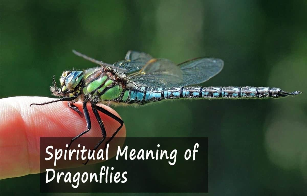 Spiritual Meaning of Dragonflies