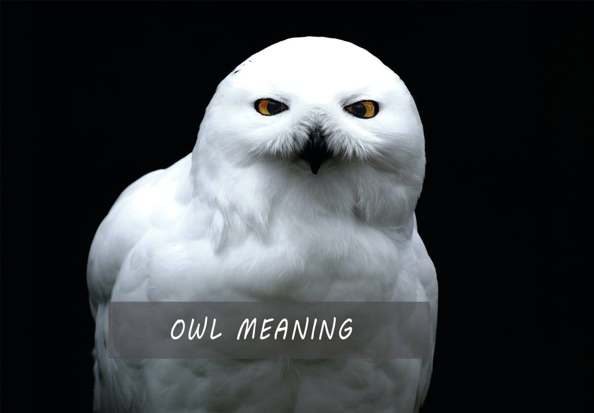 owl meaning