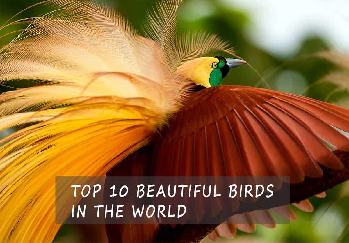 top10 beautiful birds in the world