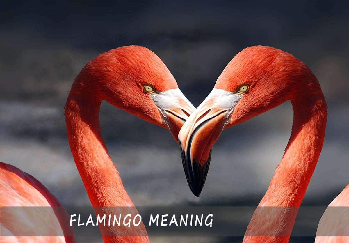 Flamingo Meaning