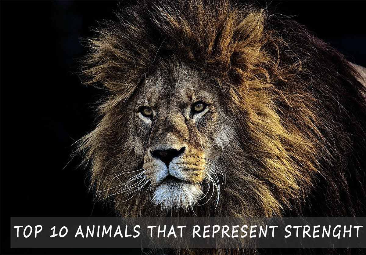 animals that represent strenght