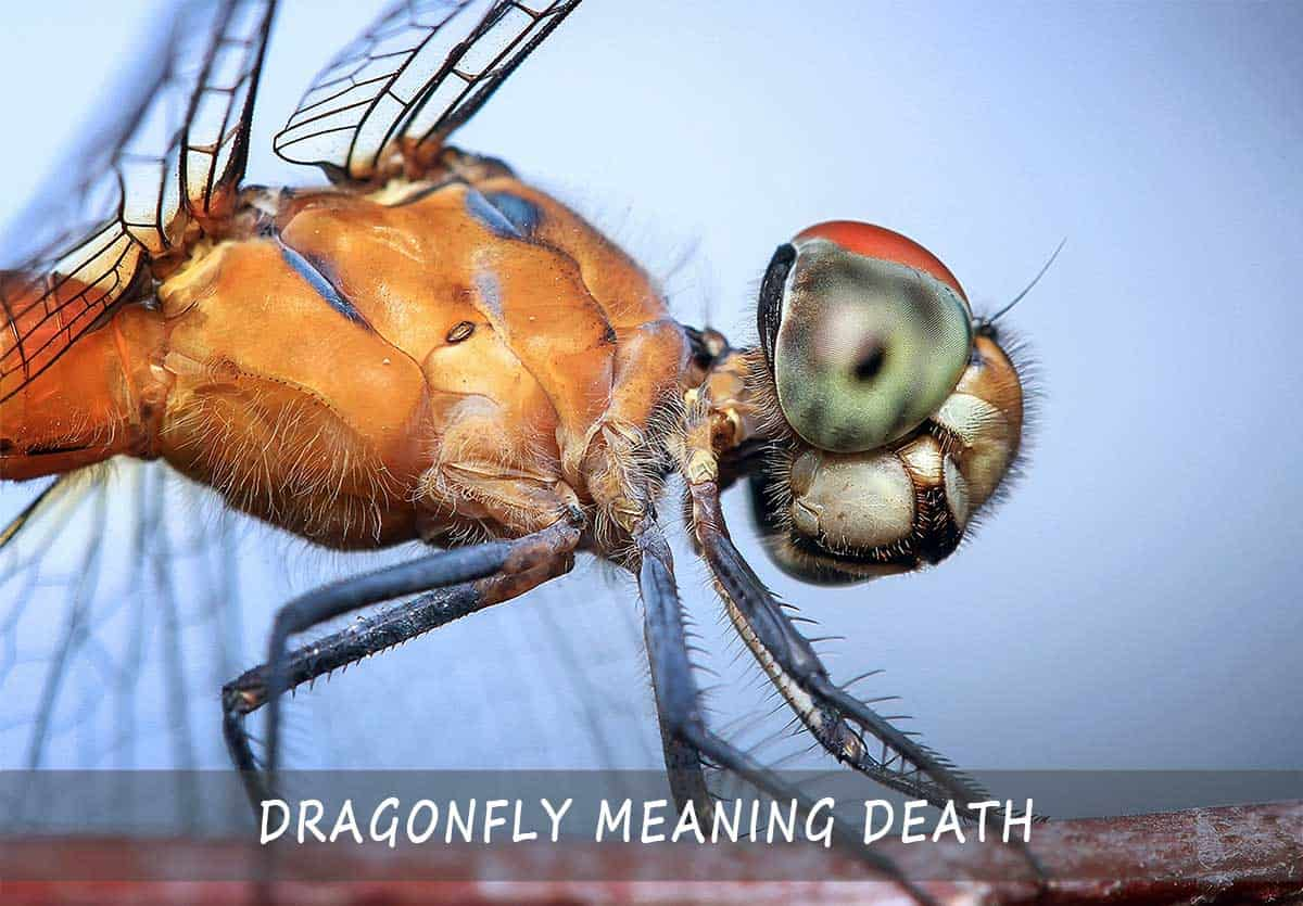 dragonfly meaning death