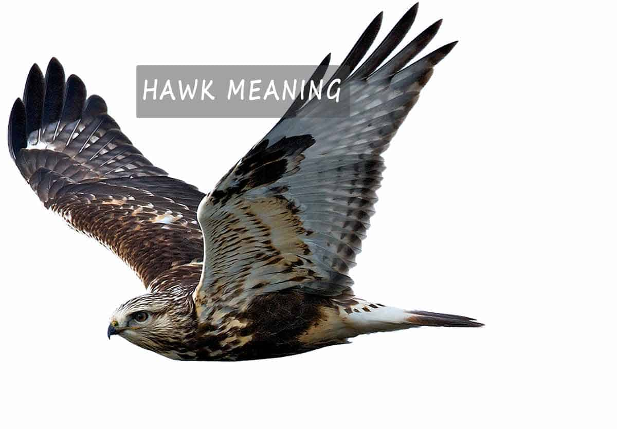hawk meaning