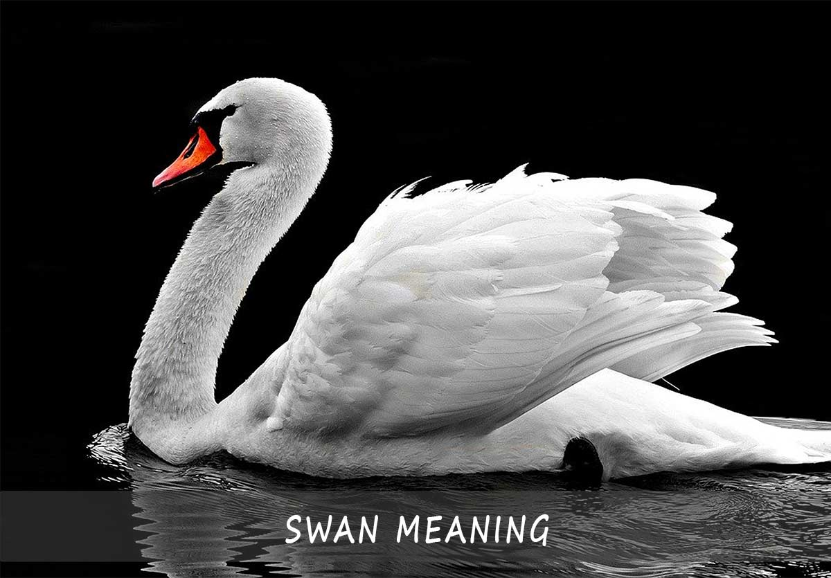 swan meaning