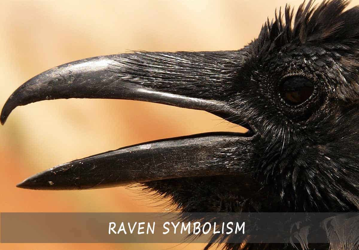 Raven Symbolism
