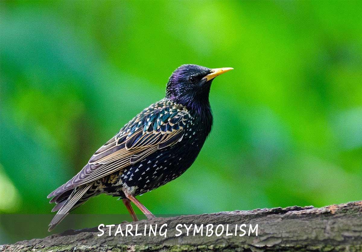 Starling Symbolism