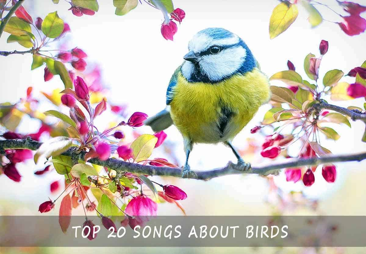 Top 20 Songs About Birds