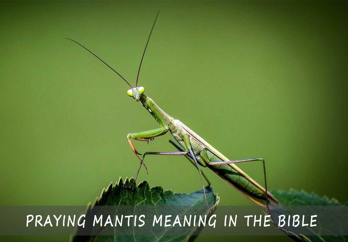 Praying Mantis Meaning in the Bible