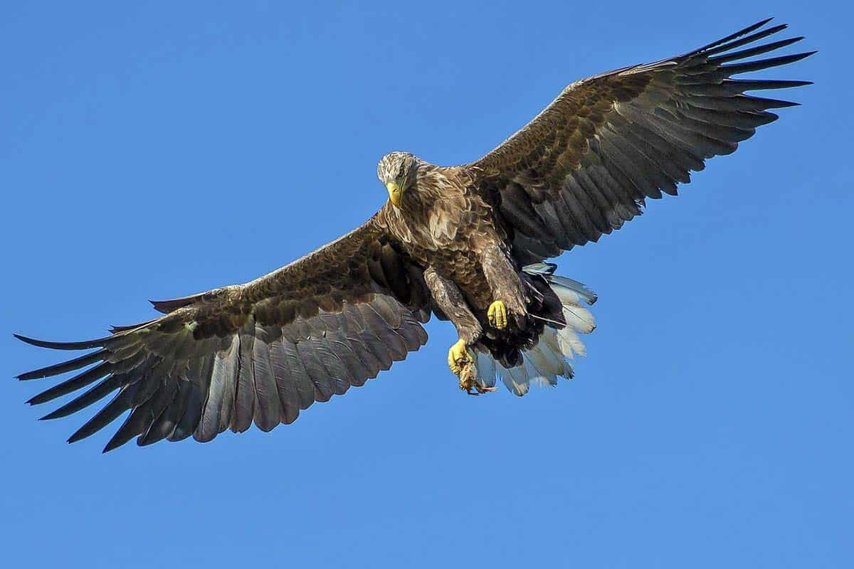 south Carolina birds of prey