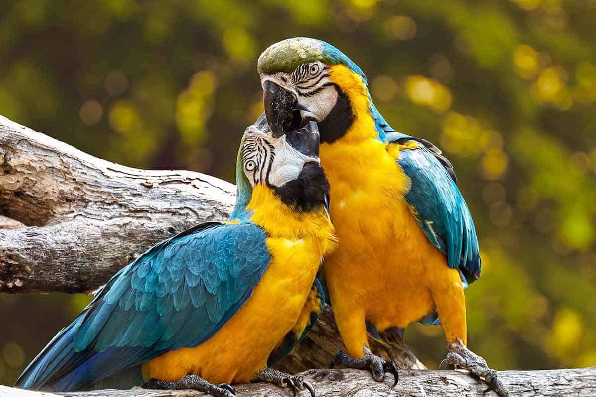 Animals That Represent Love