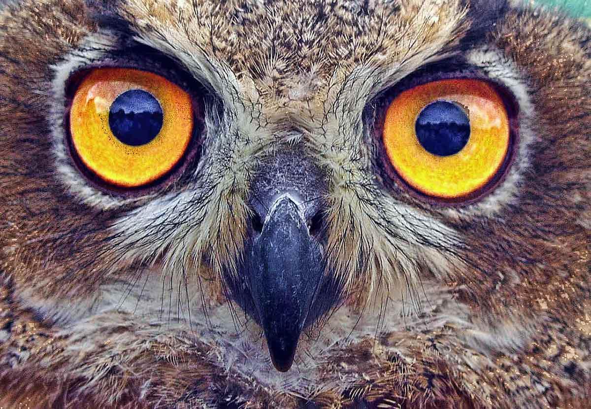 Bird-Vision