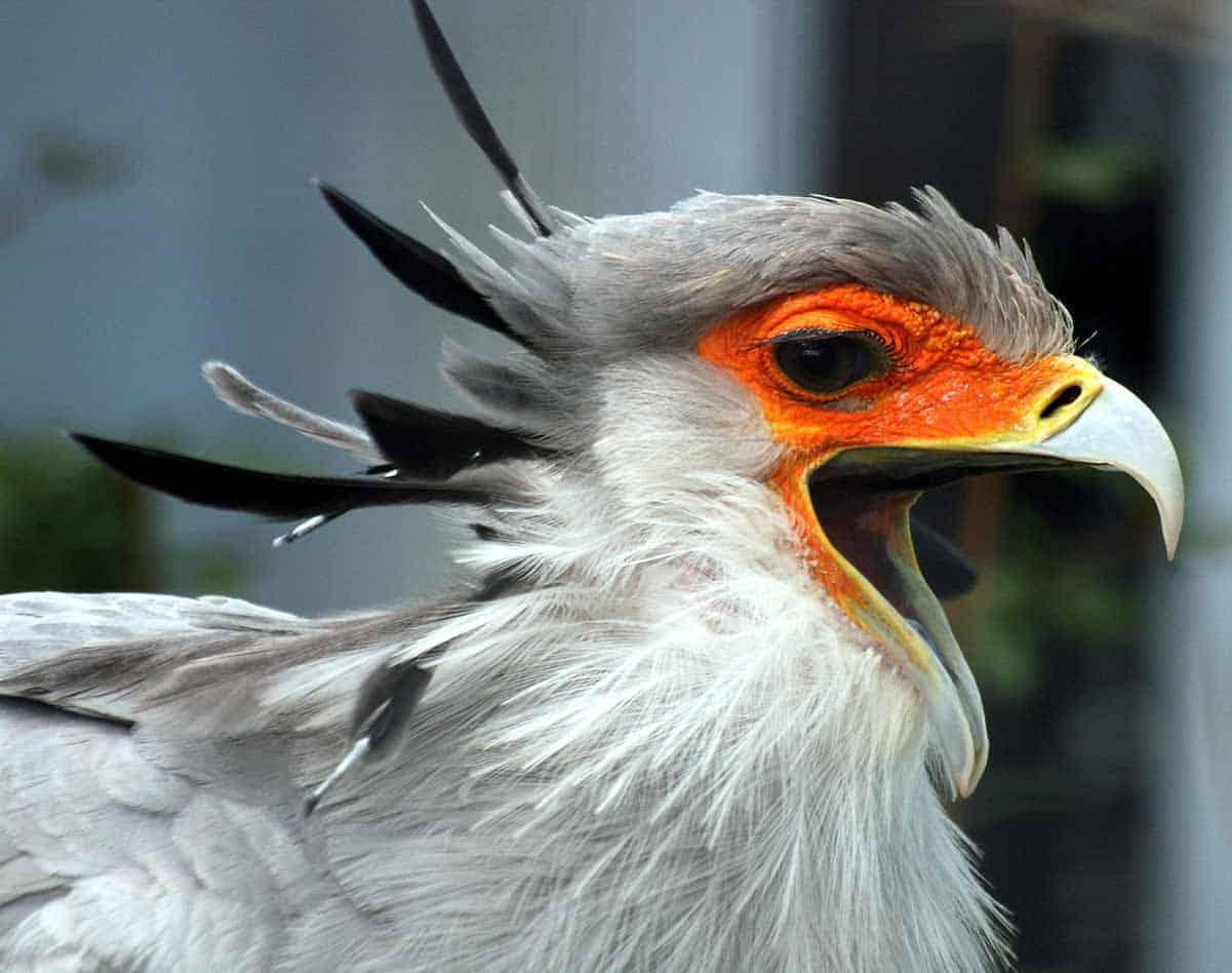 Birds of prey Africa