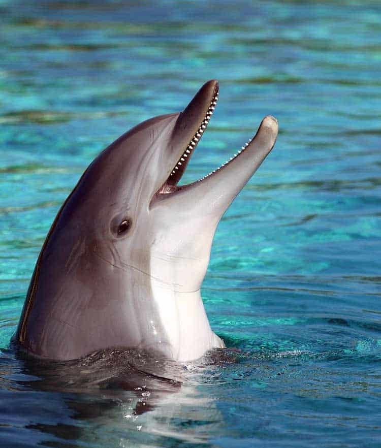 dolphin love symbol