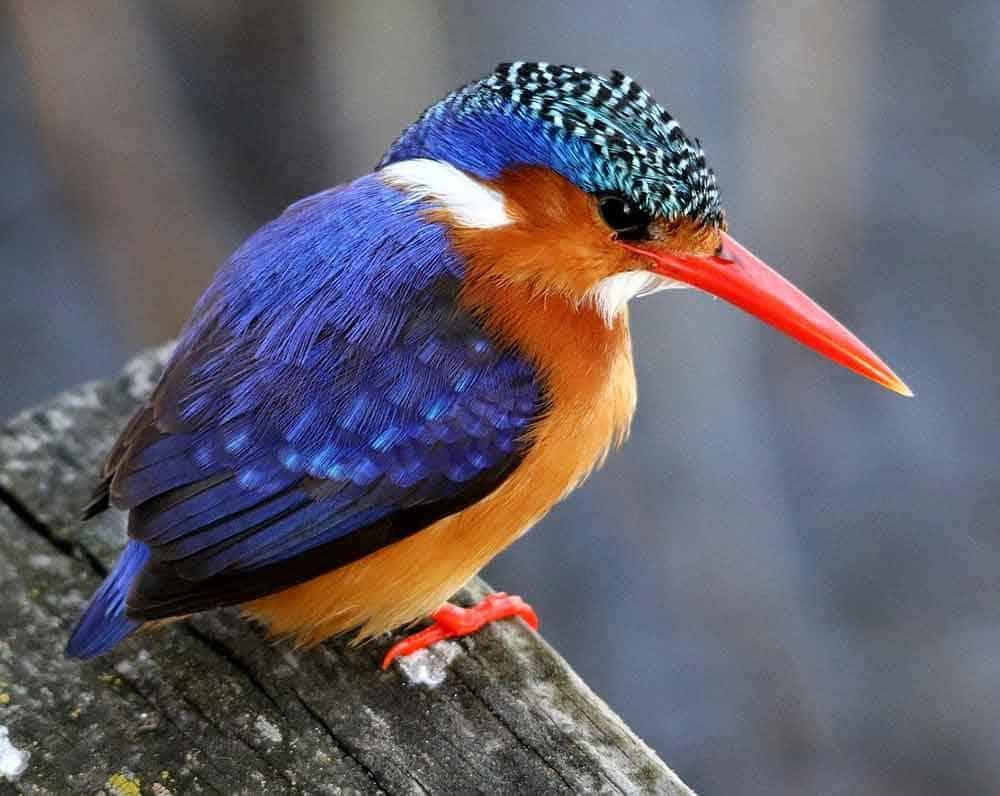 Kingfisher Symbolism