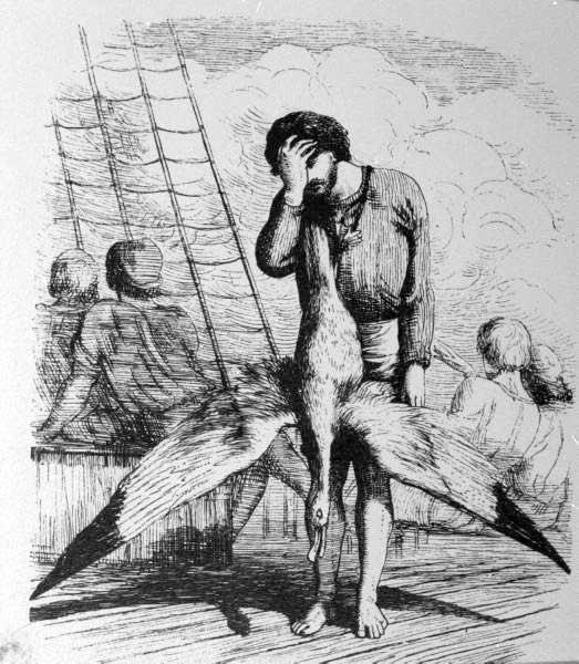 albatros ancient mariner