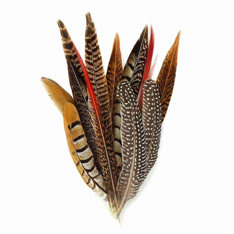Meaning of the Pheasant Feather