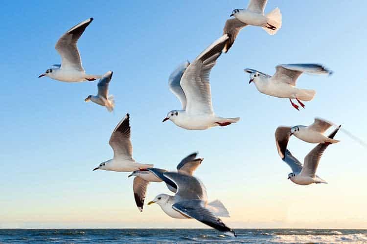 Flock Of Seagulls Symbolism