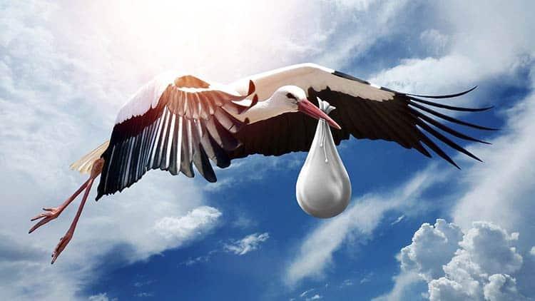 Stork is bird that delivers babies
