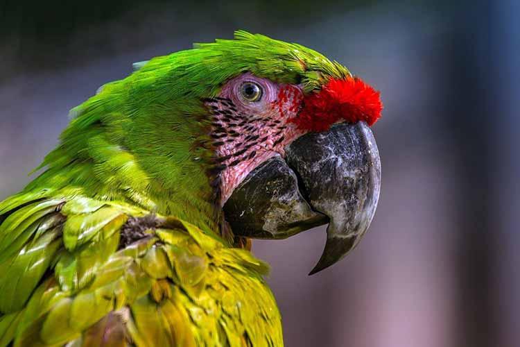 parrot Spirit Animal