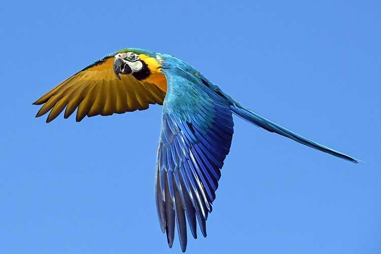 Parrot flying symbolism